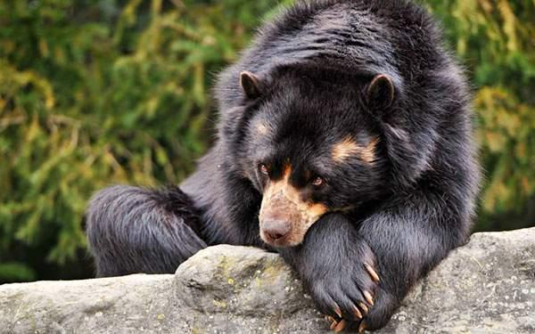 木の上に両手をついて上目遣いなクマを撮影した可愛い写真壁紙画像