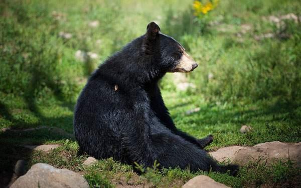 足を伸ばして座る愛嬌たっぷりのクマさんを撮影した可愛い写真壁紙画像