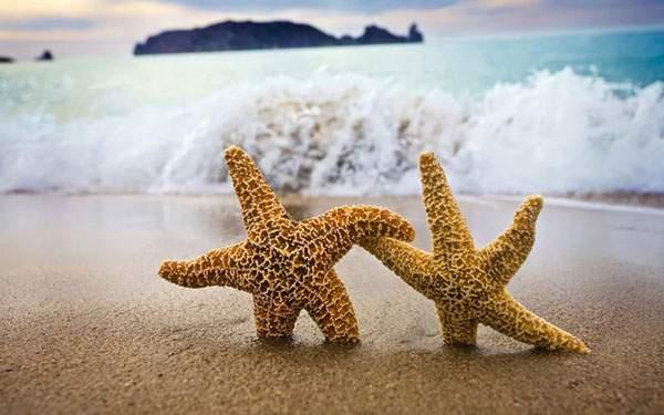 浜辺に立った二つのヒトデの可愛い写真壁紙画像