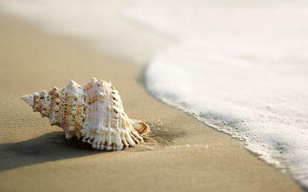 波打ち際の貝を撮影した綺麗な写真壁紙画像