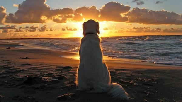 夕日を見つめる犬の後ろ姿を撮影した綺麗な写真壁紙画像