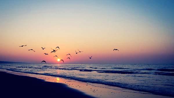 夕日の浜辺を飛ぶカモメたちの美しい写真壁紙画像