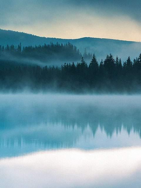 trillium-mist