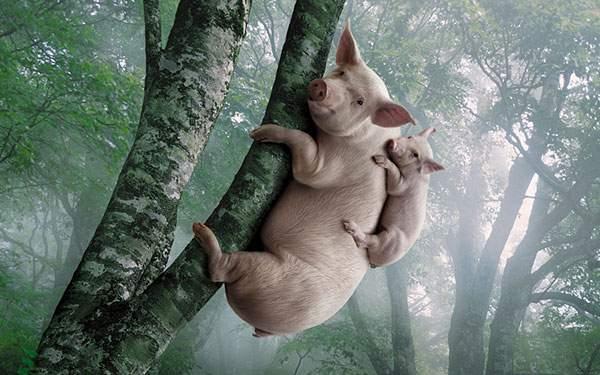 木に登った豚の親子のユニークな写真壁紙画像