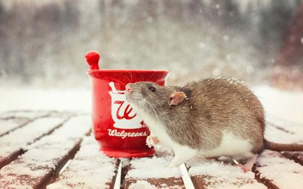 雪の中のネズミを撮影した綺麗な写真壁紙画像
