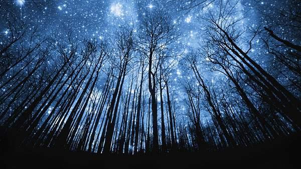 森の木々越しに見上げた星空を撮影した幻想的な写真壁紙画像