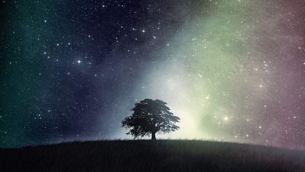 草原に生えた一本の木と星空を撮影した幻想的な写真壁紙画像