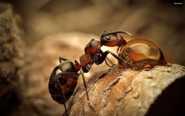 木の上に落ちた水滴の水を飲むアリの可愛い写真壁紙画像