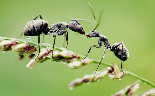 花の茎の上で出会った2匹の蟻をマクロ撮影した高画質な写真壁紙画像