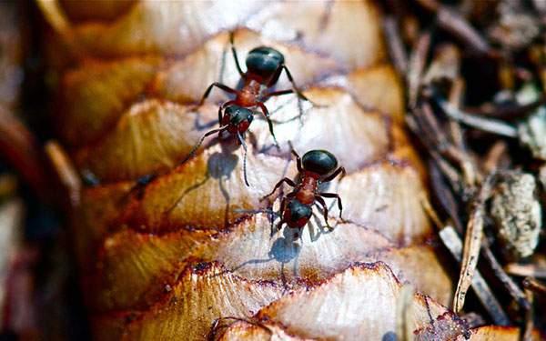仲良く並んで歩く2匹の蟻を撮影した高画質な写真壁紙画像