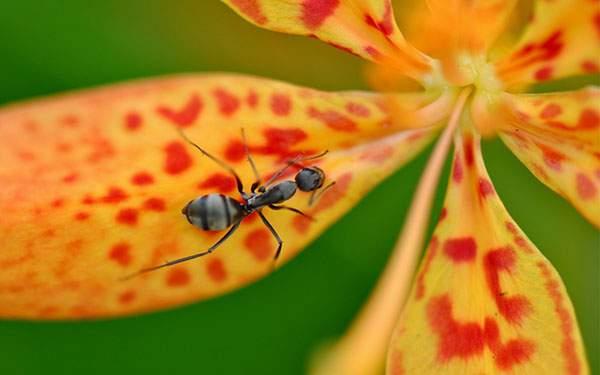 オレンジ色の花の上の蟻を撮影した綺麗な写真壁紙画像