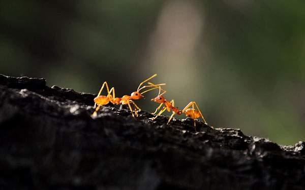 木の上の2匹の小さな蟻を撮影した可愛い写真壁紙画像