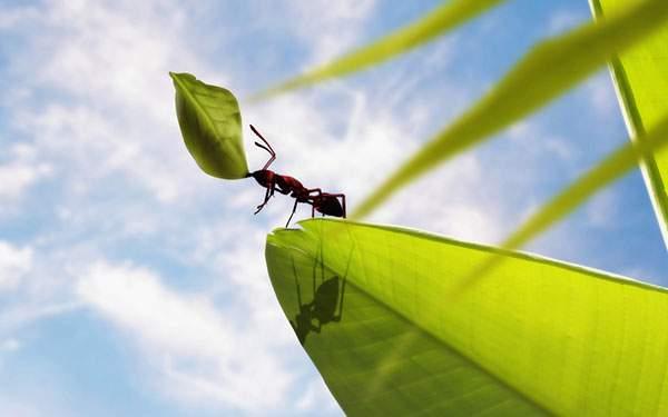 葉っぱを運ぶ蟻を青空をバックに撮影した綺麗な写真壁紙画像