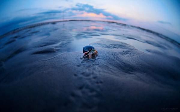 浜辺を歩くヤドカリを魚眼レンズで撮影した可愛い写真壁紙画像