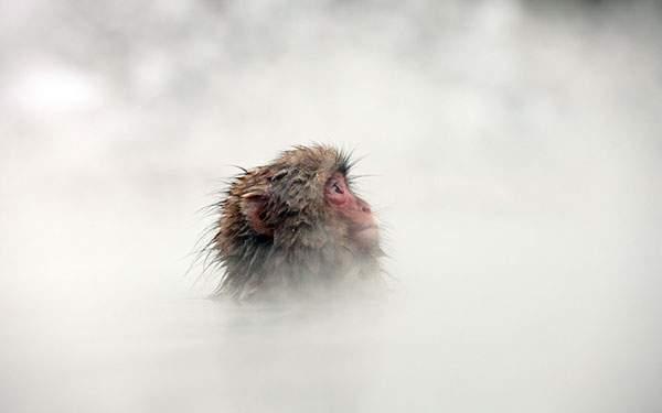 真っ白な温泉の湯気の中の小猿を撮影した可愛い写真壁紙画像