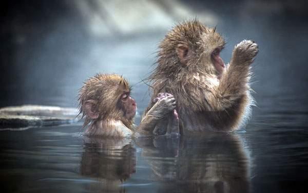 仲良く二匹揃って同じポーズで温泉に浸かるサルの親子の可愛い写真壁紙画像
