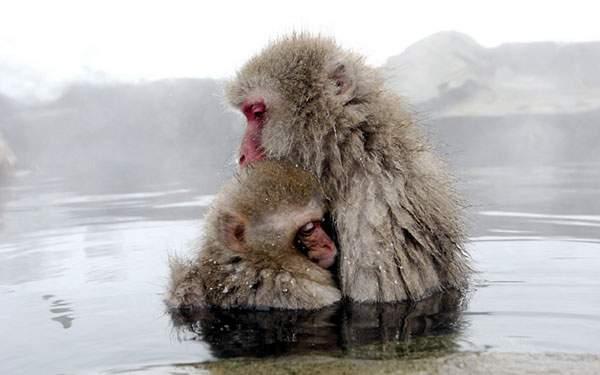 雪の中の温泉に抱き合いながら入る猿の親子の可愛い写真壁紙画像