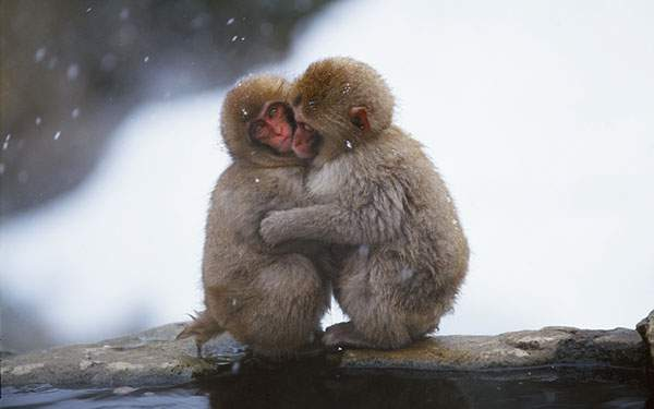 身を寄せ合って寒さをしのぐ二匹の子ザルの可愛い写真壁紙画像