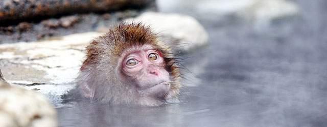 お馴染みの日本猿