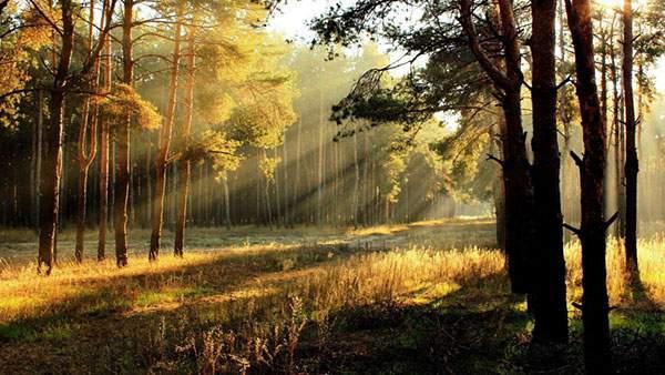 森に降り注ぐ朝日を撮影した美しい写真壁紙画像