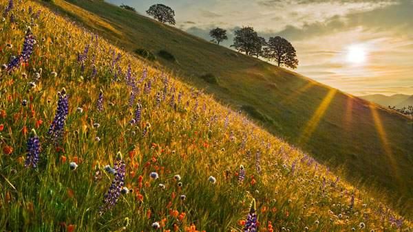 草原の花たちと丘の向こうから見える朝日を撮影した綺麗な写真壁紙画像