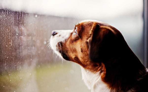 窓の外を見つめる犬を撮影した綺麗な写真壁紙画像