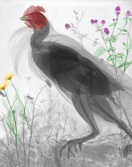 線を使った写真作品がちょっとグロテスクなのに美しい! - 05