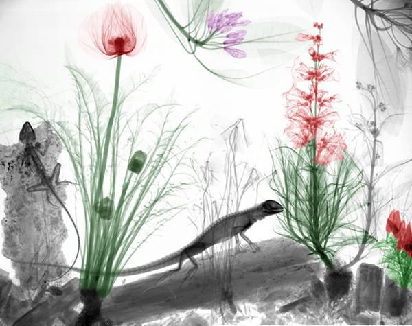 線を使った写真作品がちょっとグロテスクなのに美しい! - 06
