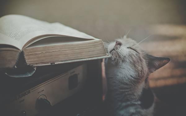 02.本と猫をくすんだ色合いで撮影したおしゃれな写真壁紙画像