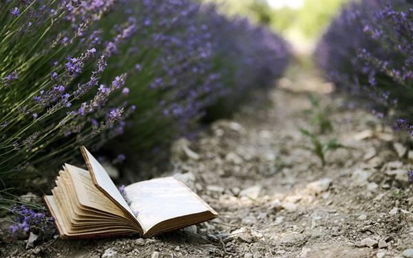 05.ラベンダー畑のあぜ道に落ちた本を撮影した綺麗な写真壁紙画像