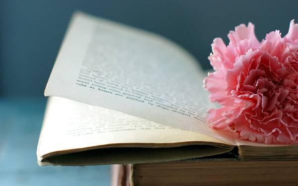 06.ピンクのカーネーションと本を撮影した綺麗な写真壁紙画像