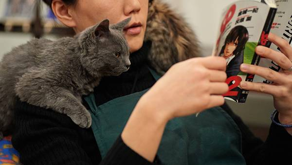 12.マンガを読む女性と肩に乗って一緒に読む猫の可愛い写真壁紙画像