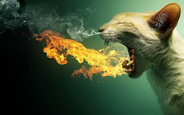 04.口から炎を鼻から煙を出す猫の壁紙画像