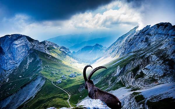 06.鮮やかな色の空と山脈を見つめる大きな角を持った山羊