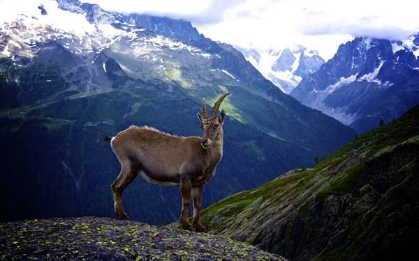 07.山の上に佇むヤギを撮影した綺麗な写真壁紙画像