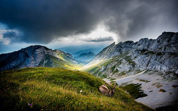 08.草むらの上の山羊と美しい山脈の写真壁紙画像