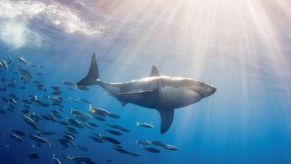 光の差し込む海中と鮫と魚の大群の綺麗な写真壁紙画像