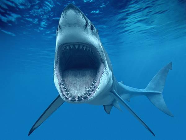大きな口を開けて泳ぐ鮫のかっこいい写真壁紙画像