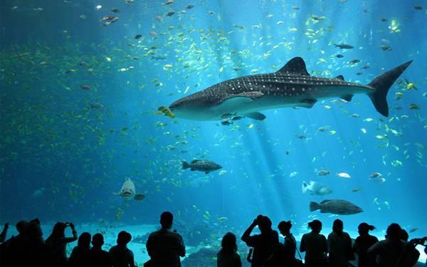 水族館の水槽の中を優雅に泳ぐ大きな鮫の綺麗な写真壁紙画像