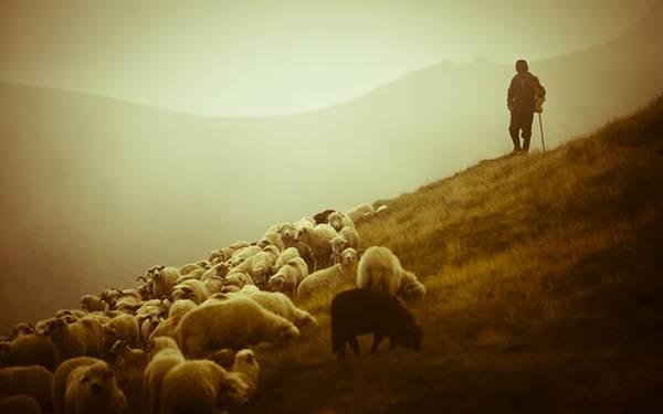 丘の上の羊たちと羊飼いを撮影した綺麗な写真壁紙画像