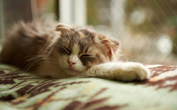 02.窓際に自分の腕を枕にして気持ちよさそうに眠る猫の可愛い写真壁紙画像