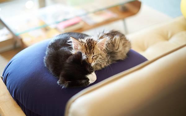 03.クッションの上で仲良く眠る2引きの子猫の可愛い写真壁紙画像