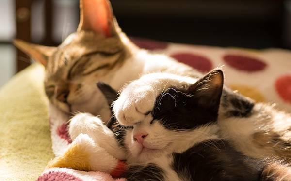 06.頭に手を乗せられたまま眠る猫の可愛い写真壁紙画像