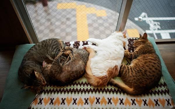 09.窓際で寄り添って眠る仲の良い猫達の可愛い写真壁紙画像