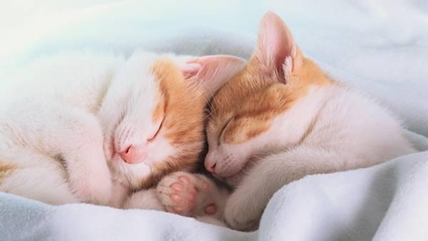 10.毛布の中で気持ち良さそう眠る2匹の子猫の可愛い写真壁紙画像