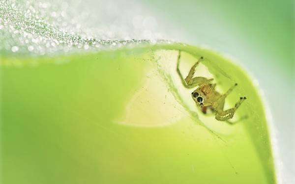 葉の裏に隠れたクモの綺麗なイラスト壁紙画像