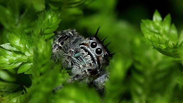 葉の中のクモをアップで撮影したかわいい写真壁紙画像