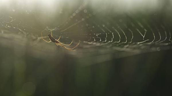 巣を作る蜘蛛を浅い被写界深度で撮影した綺麗な写真壁紙画像