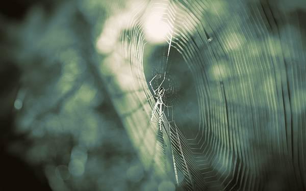 蜘蛛の巣をグリーン系の色合いで撮影した綺麗な写真壁紙画像