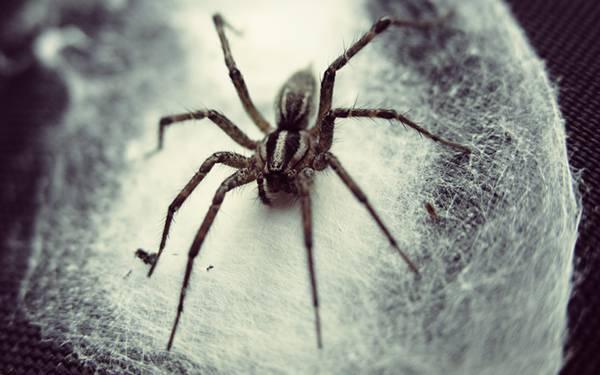 長い足を広げたクモをモノクロで撮影したかっこいい写真壁紙画像